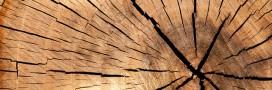 Une batterie écologique… à partir de bois
