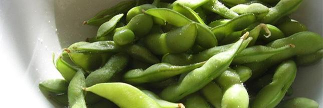 Le soja, un champion de l'alimentation mondiale