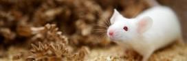 En France, les expérimentations animales sont en baisse