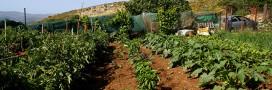 Interview – Troc-légumes, échangez ou vendez les produits du potager