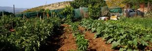 Interview - Troc-légumes, échangez ou vendez les produits du potager
