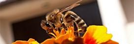 Sauvez les abeilles en leur fabriquant un nid!