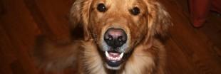 Faire garder ses animaux domestiques durant les vacances (4)