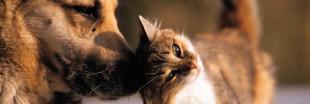 Faire garder ses animaux domestiques durant les vacances (1)