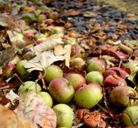 -bélgica residuos de comida-manzanas