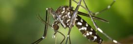 Soulager les démangeaisons de piqûres de moustiques