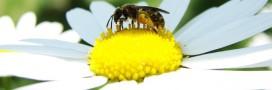 Sans les abeilles: les aliments voués à disparaître