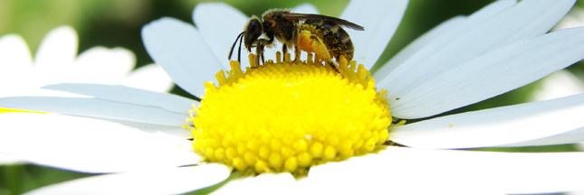 Sans les abeilles : les aliments voués à disparaître