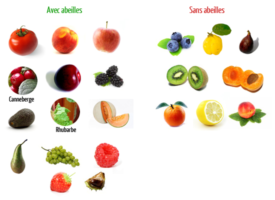 avec-sans-abeilles-fruits