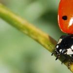 Lutte biologique : les petites bêtes et insectes utiles à votre jardin