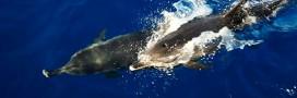 Le dauphin, «personne non humaine» en Inde