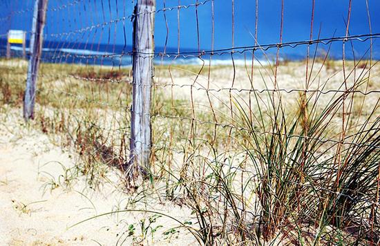 15 écogestes à la plage et à la mer Dune-plage-sable-france-herbes