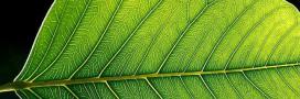 La photosynthèse des plantes mesurée depuis l'espace, en vidéo