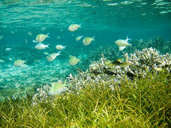 15 écogestes à la plage et à la mer Herbier-de-posidonie-mer