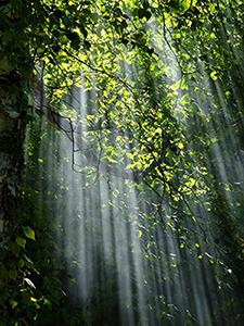 rayon-soleil-forêt