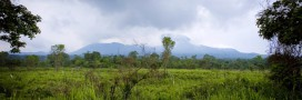 Extraction pétrolière dans le parc des Virunga: la lutte n'est pas finie