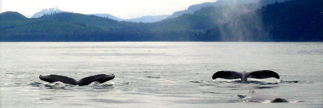 Un sanctuaire pour les baleines et dauphins en Uruguay Baleines-mer-ban
