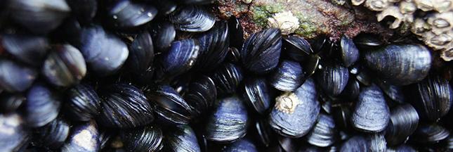 moules-mer-microplastiques-plastique-ban.jpg