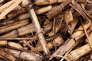 bois-coupe-canne-a-sucre-fibre-texture