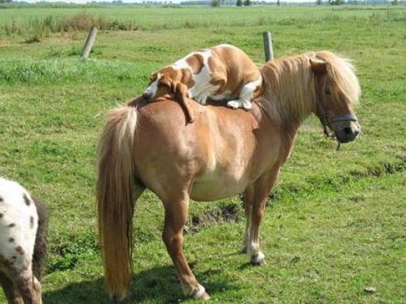 Drôles de couples dans la nature Cheval-chien