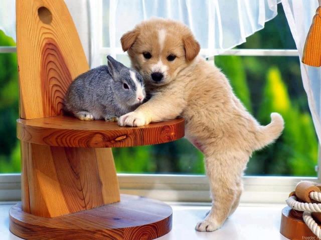 Drôles de couples dans la nature Drole-coupe-chiot-chaton