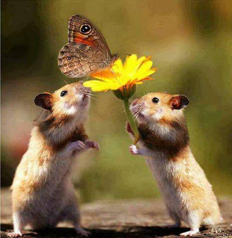 Drôles de couples dans la nature Drole-couple-papillon