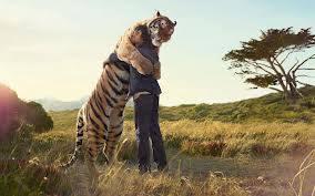 Drôles de couples dans la nature Drole-couple-tigre