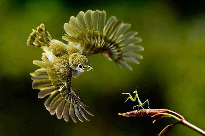 Drôles de couples dans la nature Droles-couples-oiseau