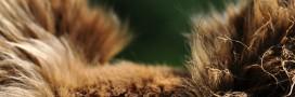 Animaux: une première interdiction de la fourrure aux Etats-Unis