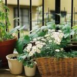 5 plantes qui adorent pousser en intérieur...