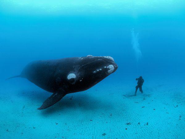 Drôles de couples dans la nature Rencontre-baleine