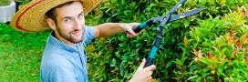 Jardinez en automne: taillez vos haies!