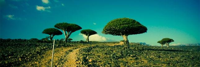 Diaporama : l'île de Socotra, un écrin de biodiversité