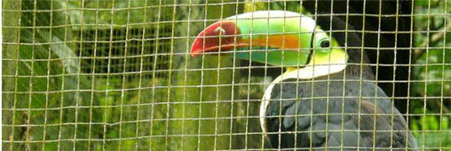 Le Costa-Rica ferme ses zoos et relâche les animaux