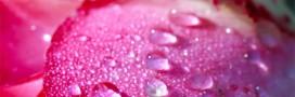 Eaux florales et hydrolats: en cuisine aussi!