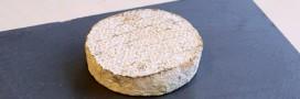 Locavore jusqu'au bout: du fromage à partir de bactéries du nez