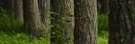 Jardinage d'hiver, nettoyez les troncs de vos arbres