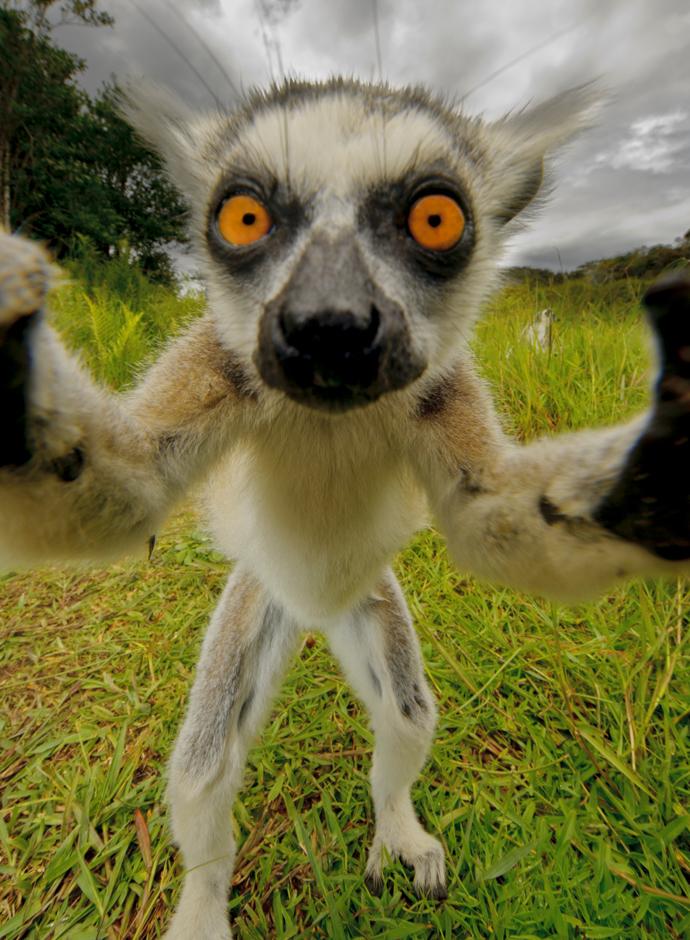 merveilles-nature-lemurien