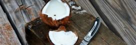 Les 1001 usages de la noix de coco