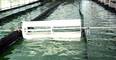 production spiruline