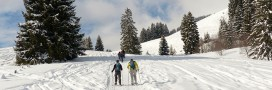 Des activités nature pour les vacances de Noël !
