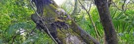 L'Amazonie, le coffre-fort de la biodiversité en danger?
