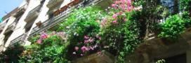 Comment faire de votre balcon un concentré de biodiversité