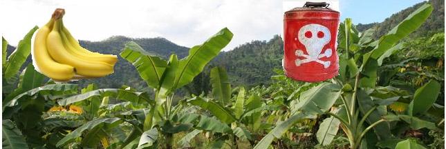L'Etat laisse-t-il volontairement la Martinique s'empoisonner au chlordécone ?