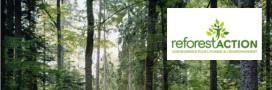 Interview: Reforest'action, des cadeaux pour reboiser