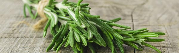 romarin plante pour maux de tete