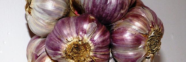 Jardinage - En février plantez de l'ail