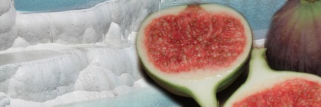 Les aliments riches en calcium