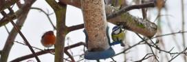 Pourquoi les oiseaux se tuent sur les pare-brises