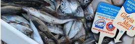 Où en est la fraude à l'étiquetage du poisson en France?